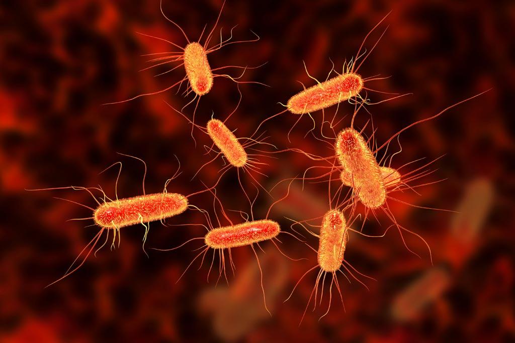 ecoli_bacteria_food_safety_illness